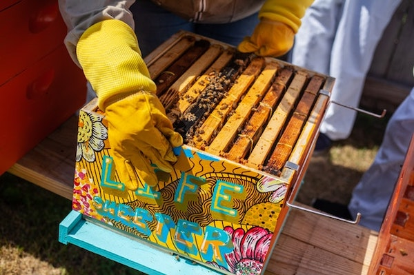 Colourful hive with bees