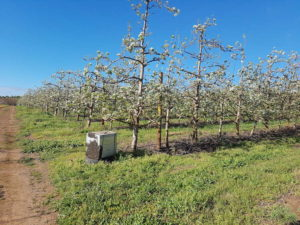 Apple & pear pollination in the Overberg